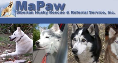 MaPaw Siberian Husky Rescue